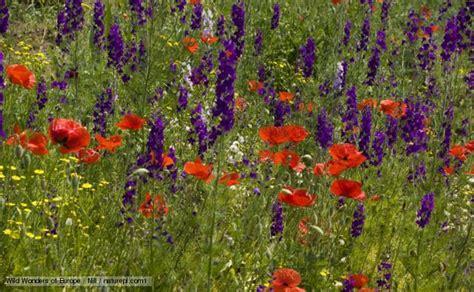 pics of flowering plants scienceinvestigators the plant kingdom