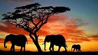 African Music   Serengeti Savannah   Relax, Sleep, Study ...