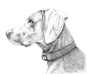 Dog Sketches Drawings