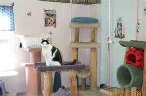 Animal Shelter Cat Room