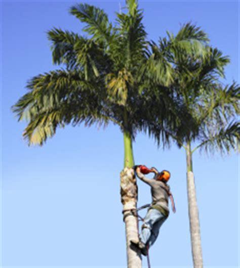 sebastian tree service offers palm tree triimming
