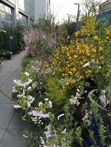 Jardinerie Truffaut Paris : cor te kerria et prunus arbustes floraison ~ Preciouscoupons.com Idées de Décoration