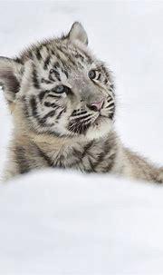beautiful things : Photo   Cute animals, Animals, Baby animals