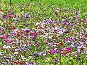 Créer Son Jardin : cr er une prairie fleurie dans son jardin guide pratique ~ Mglfilm.com Idées de Décoration