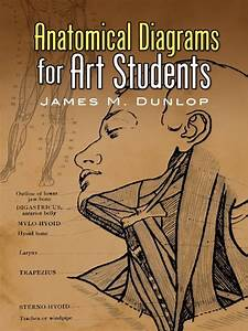 Anatomical Diagrams For Art Students In 2019