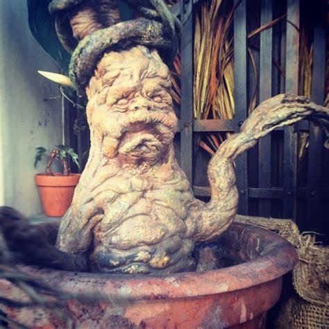 mandrakes harry potter 17 best images about harry potter mandrake ideas on pinterest name labels harry potter