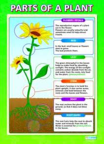Image Gallery labeling a plant ks1