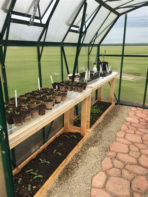 seedlings growing   grandio elite greenhouse