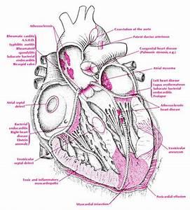 Cardiovascular Quotes. QuotesGram