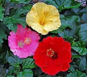 Feng Shui Pflanzen Reichtum : erde pflanzen ~ Markanthonyermac.com Haus und Dekorationen