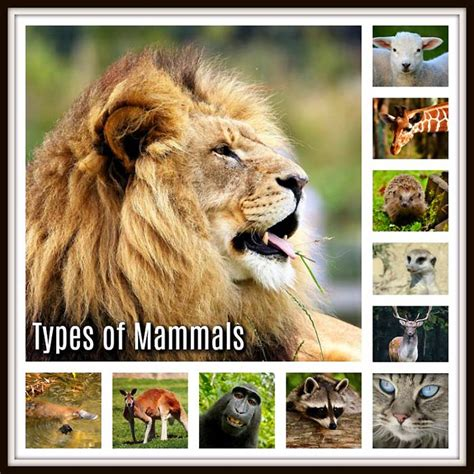 Types of Mammals Placental Marsupial & Monotremes Mammals
