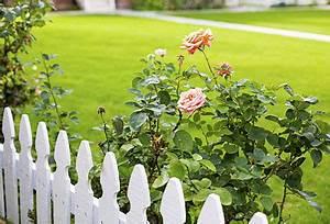 Rasenpflege Im Sommer : der sommer naht rasenpflege im juni ~ Frokenaadalensverden.com Haus und Dekorationen