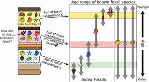 The gallery for --> Relative Dating Fossils