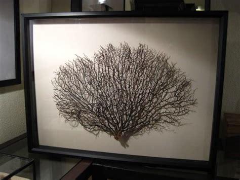 large framed black sea fan sea fan wall art
