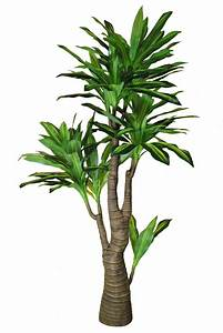 Yucca Palme Winterhart : yucca palme 180cm gr n gelb da kunstpalmen k nstliche palme dekopalme ebay ~ Frokenaadalensverden.com Haus und Dekorationen
