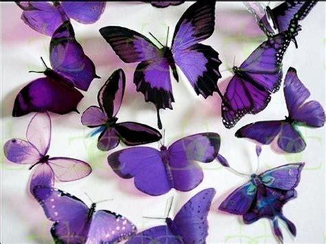 lovely butterflies roses wallpapers wallpaper hd