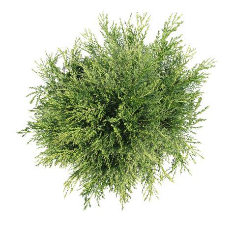 bush png top view  png images clipart