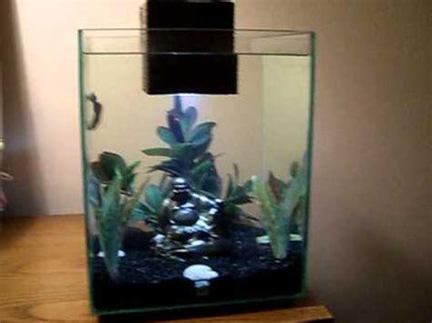 Fluval Chi Betta Tank Youtube