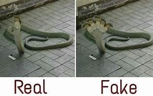 Reptiles Snakes Facts
