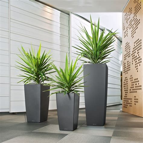 Bepflanzung Ungewoehnlicher Pflanzengefaesse by Plants Services Indoor Plants Table Top Plants