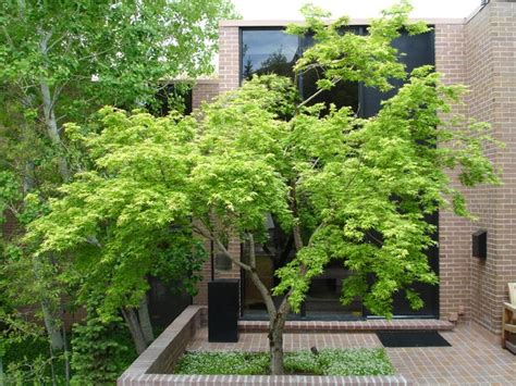 modern trees landscaping trees