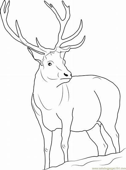 Reindeer Coloring Pages Realistic Rudolph Printable Santa