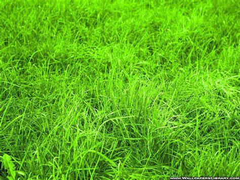 green grass wallpapers  title