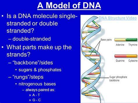 Double Helix Model Labeled Parts