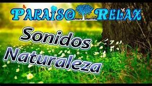 Sonidos, del, bosque, Mar de las Pampas Updated 2019 Prices