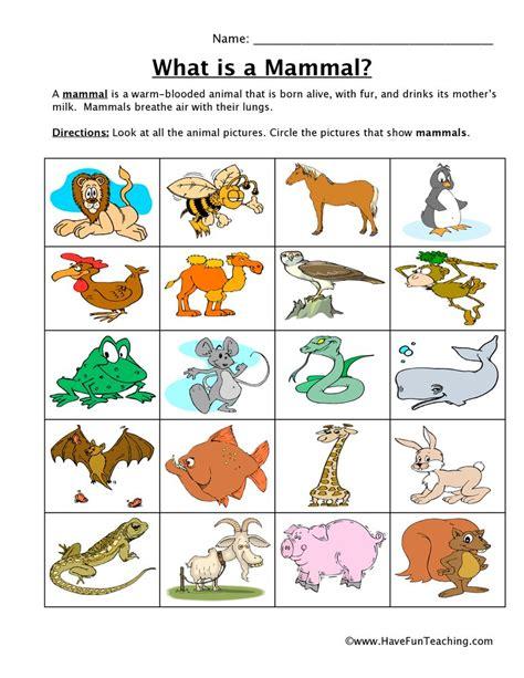 Mammal Classification Worksheet Have Fun Teaching