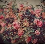 vintage rose on Tumblr...Vintage Flowers Tumblr