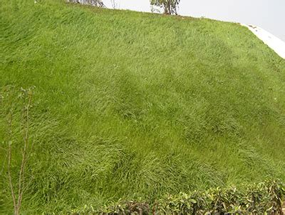 hydro grass seed cost lawn seed spray cheap bermuda grass lawns lawn spraying cost of grass seed hydro mousse on