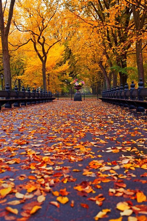 Fall Road Iphone Wallpaper by New York Autumn Park Walk Road Yellow Leaves Iphone X 8