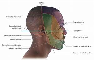 External Face Anatomy | www.pixshark.com - Images ...