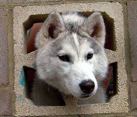 Curious Animals | Animals Zone
