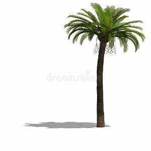 überwintern Von Palmen : palme baum stockbild illustration von bl tter ~ Michelbontemps.com Haus und Dekorationen