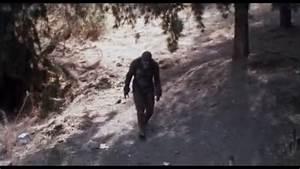 BEST Bigfoot Sightings 2017 - YouTube