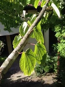 Kleiner Baum Garten : kleiner baum in stuttgarter garten gesucht ~ Lizthompson.info Haus und Dekorationen
