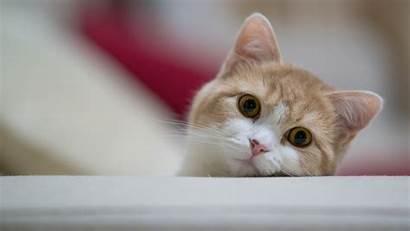 Cat 1080p Wallpapers