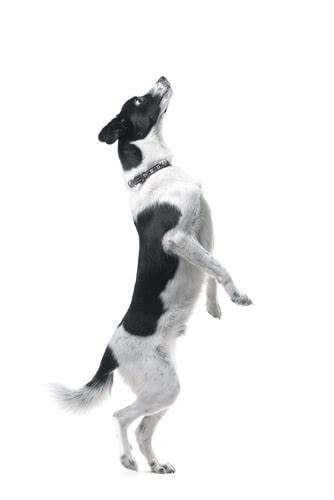dog trainer   stop  dog  jumping  dog