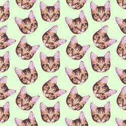 cat patterns cat patterns on