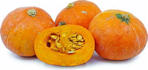 Red Kuri Squash Information and Facts