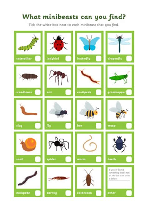 Minibeast  Insect Discovery Sheet  Free Early Years & Primary Teaching Resources (eyfs & Ks1