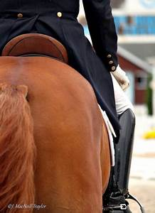 18 best images about Horse Show Clothing on Pinterest ...
