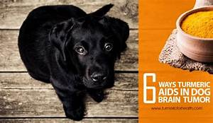 6 Ways Turmeric Aids In Dog Brain Tumor