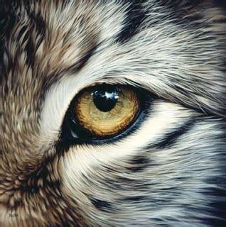 animal eye art google search  creature wolf eyes