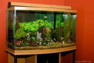 Large Freshwater Fish Tanks