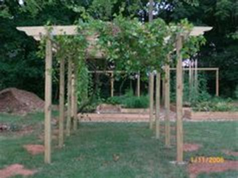 muscadine trellis design muscadine type grape arbor complete with spigots at each vine each with quot drip quot feature for