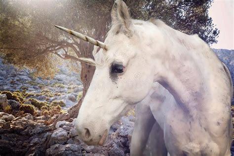unicorno reale fotografia stock immagine 45818046 unicorn immagine stock immagine di cadere profilo realistico 61962765