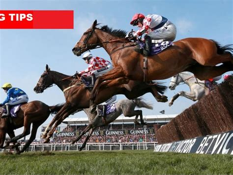 cheltenham five racing horses races tips racecourse race fortune could limo horse festival tomorrow hen stag run donegal hire thatsfarming